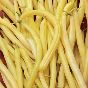 Beans, Cherokee Wax