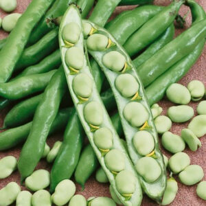 Beans, Fava Broad Windsor