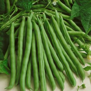 Beans, Bush - Green Podded