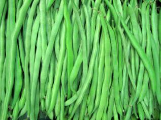 pole bean, kentucky wonder (65 days) | american seed co.