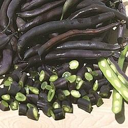 Beans, Royalty Burgundy