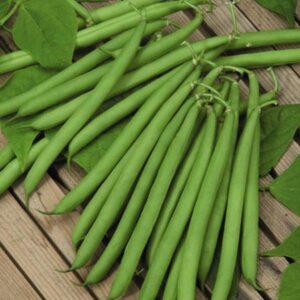 Beans, Slenderette