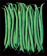 Beans, Tema
