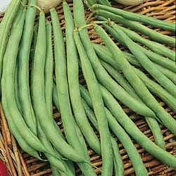 Beans, Topcrop