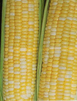 Sweet Corn, Butter & Sugar