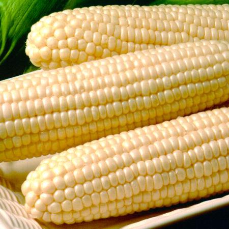 White Hybrid Sweet Corn