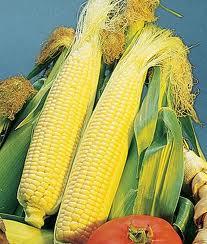 Sweet Corn, Golden Queen