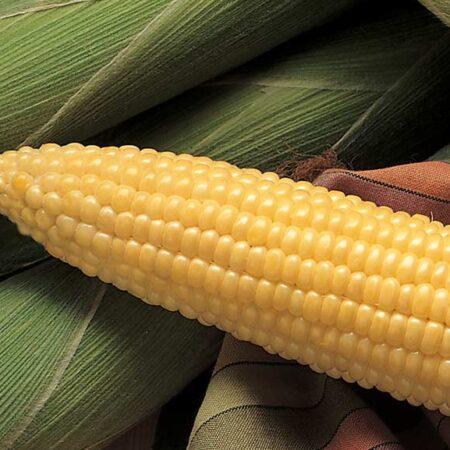 Sweet Corn, Honey Select