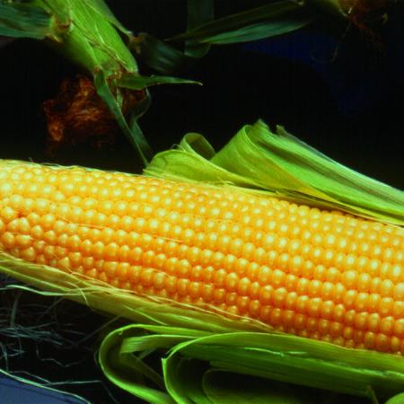 Sweet Corn, Incredible