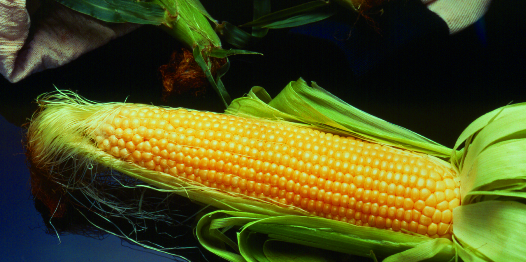 Tips For Treatments Natural Corns