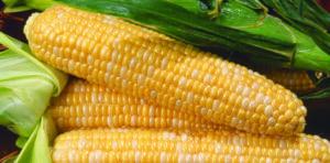 Sweet Corn, Kristin