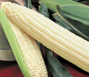 Sweet Corn, Silver Queen