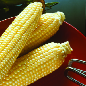 Sweet Corn, Sugar Buns