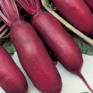 Beets, Cylindra