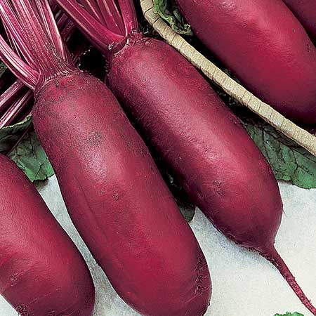 Image result for long beets cylindra