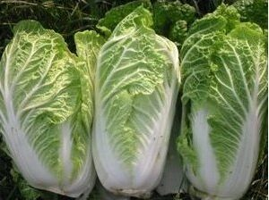 Cabbage, Michihili