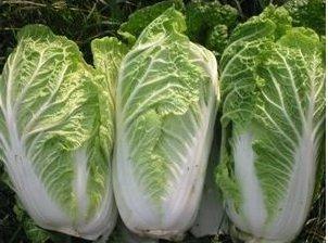 Cabbage, Michihili