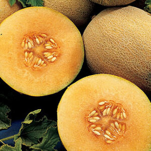 Cantaloupe, Ambrosia Hybrid