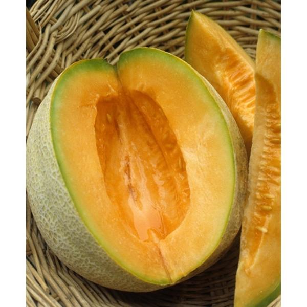Cantaloupe, Burpee Hybrid