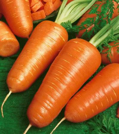 Carrot, Chantenay Red Core