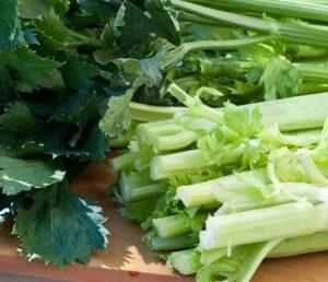 Celery, Tall Utah