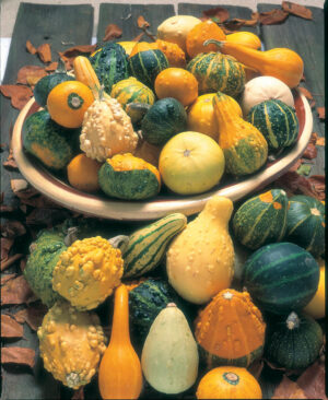Gourd, Ornamental Mixed