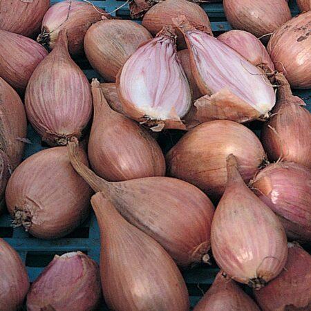 Onion Sets, Shallots