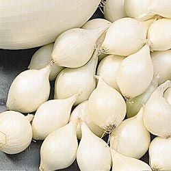 Onion Sets, White
