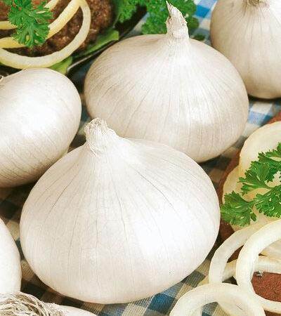 Onion, Sweet Spanish White