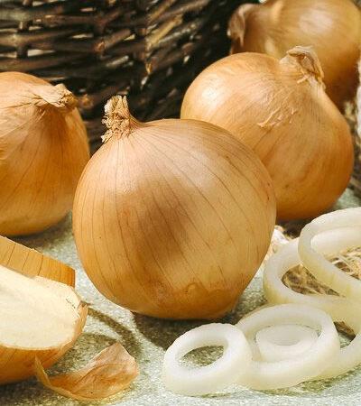 Onion, Sweet Spanish Yellow