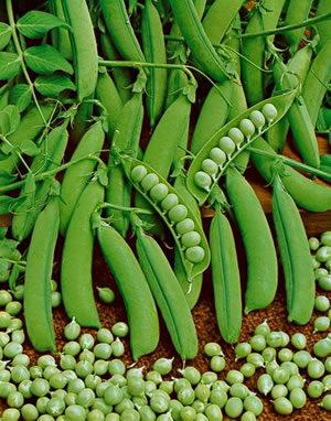 Peas, Little Marvel