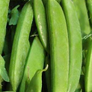 Peas, Oregon Sugar Pod