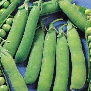 Peas, Wando