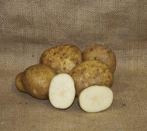 Potatoes, Eva