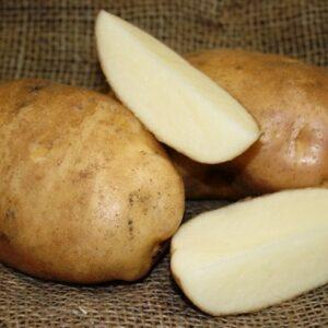 Potatoes, Katahdin