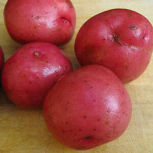 Potatoes, Red Norland
