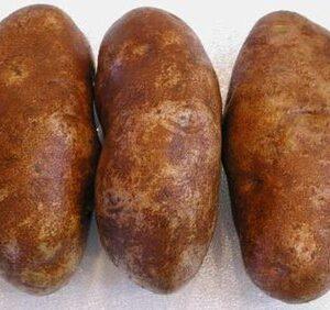 Potatoes, Russet Burbank