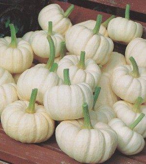 Pumpkins, Baby Boo
