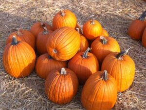 Pumpkins, Howden
