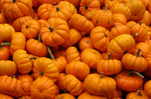 Pumpkins, Jack Be Little