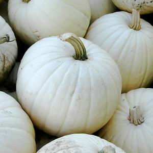 Pumpkins, Lumina