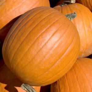 Pumpkins, Mammoth Gold
