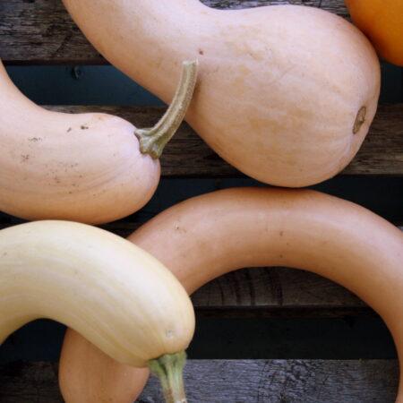 Crookneck Pumpkins