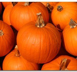 Pumpkins, Small Sugar