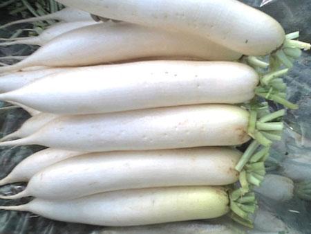Radish, China White