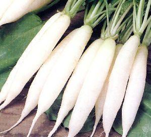 Radish, White Icicle