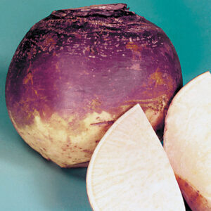Rutabaga, American Purple Top