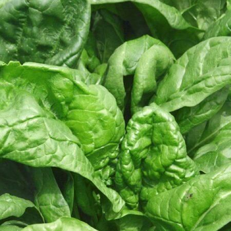 Spinach, Tyee