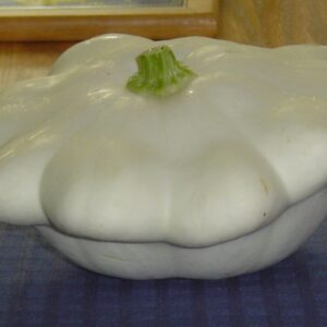 Squash, Patty Pan