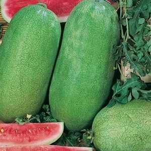Watermelon, Charleston Grey